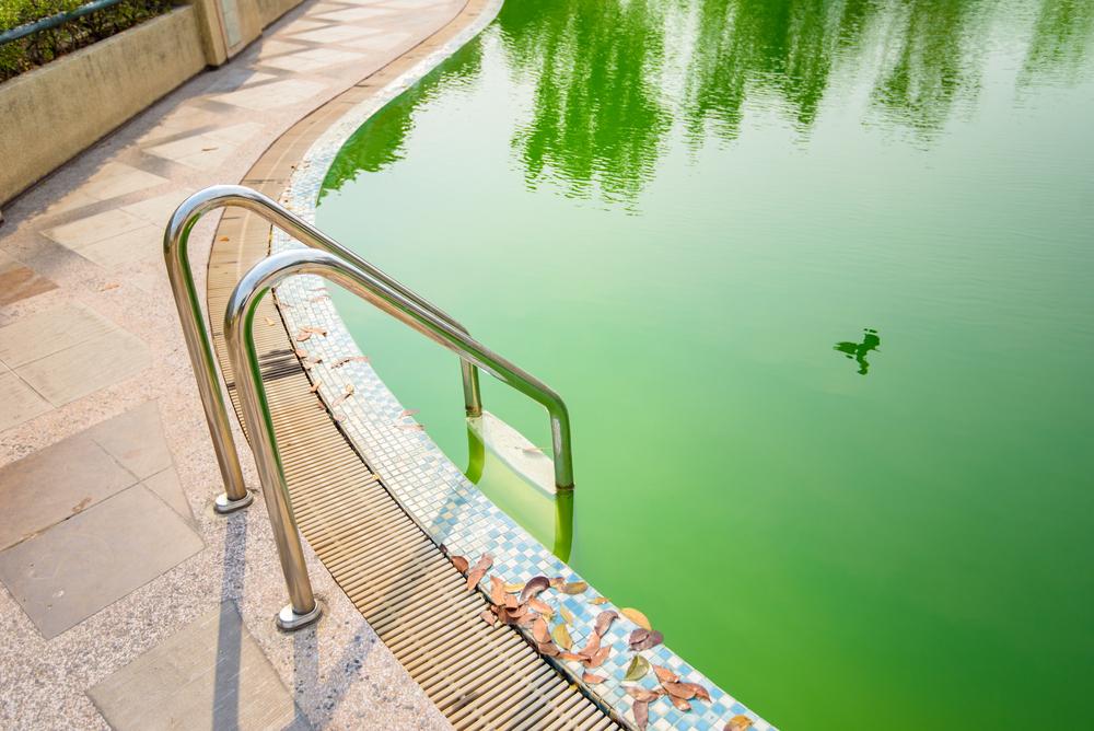 Eau de piscine verte pour arroser son jardin