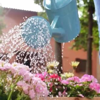 Peut-on utiliser l'eau de sa piscine pour arroser son jardin ?